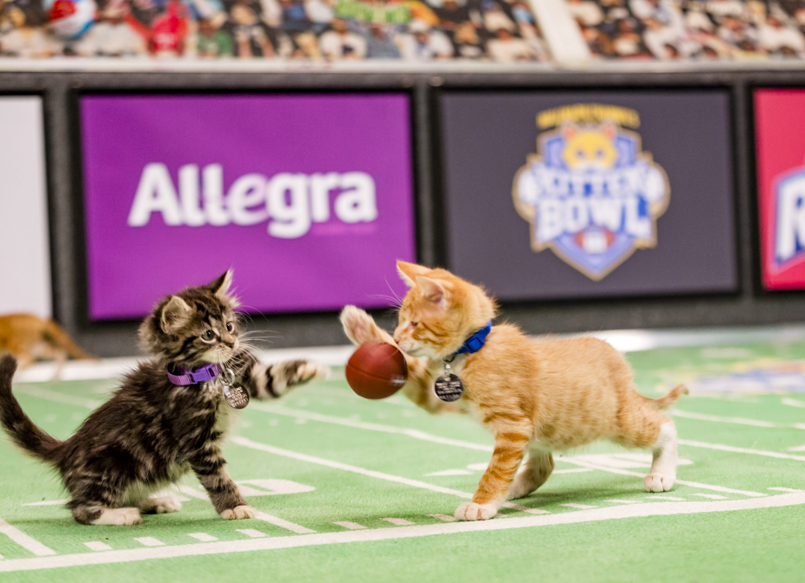 Kitten Bowl III Final Photo Assets