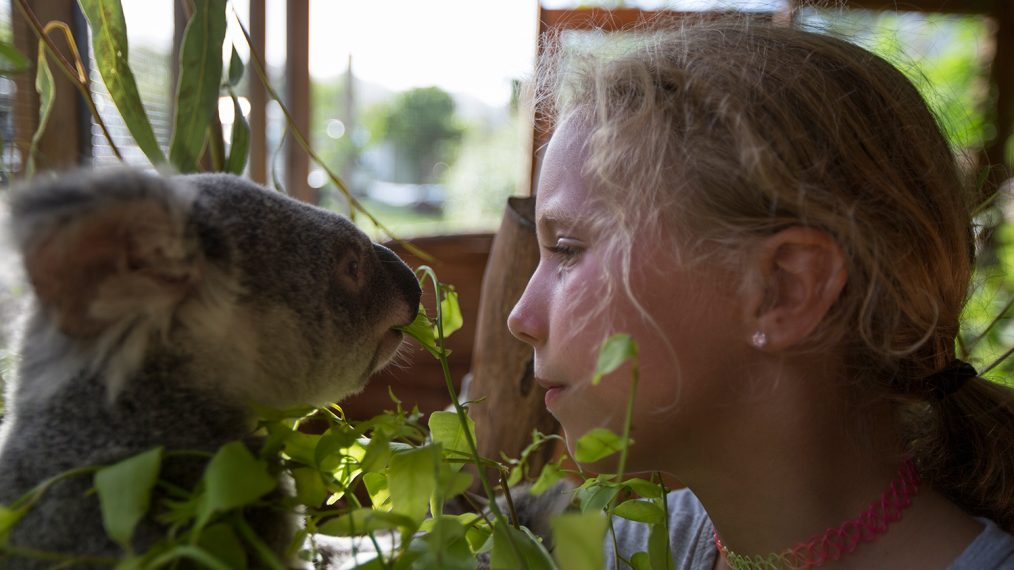 'Dodo Heroes' Clip: Meet Izzy, the 10-year-old Koala Whisperer