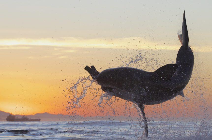 Discovery Shark Week 2020 Air Jaws