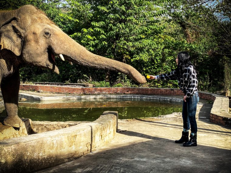 cher kaavan paramount+ Cher and the loneliest elephant